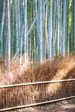Bamboo Forest in Arashiyama, Kyoto. Japan Royalty Free Stock Image