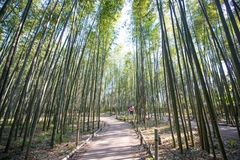 Bamboo Forest in Arashiyama, Kyoto. Japan Stock Images