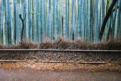 Bamboo forest of Arashiyama. Kyoto, Japan. Arashiyama is a district on the western outskirts of Kyoto Royalty Free Stock Photos