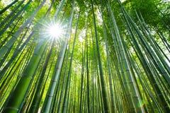 Bamboo forest, Arashiyama, Kyoto, Japan. Bamboo forest  with sun flare, Arashiyama, Kyoto, Japan Stock Photo