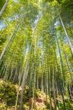 Bamboo forest at Arashiyama touristy district , kyoto Royalty Free Stock Photo