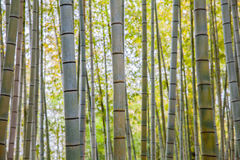 Bamboo forest at Arashiyama touristy district , kyoto Royalty Free Stock Photos