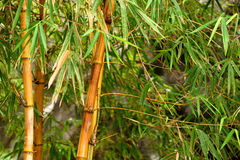 Bamboo forest background Royalty Free Stock Photos