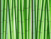 Bamboo Forest Background 2 Royalty Free Stock Image