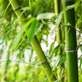 Bamboo forest background Stock Photos