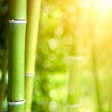 Bamboo forest background Stock Images