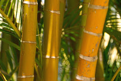 Bamboo forest background Royalty Free Stock Photo
