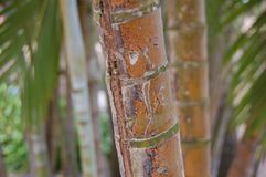 Soothing Bamboo Forest Background Royalty Free Stock Images