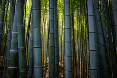 Bamboo Forest. Beautiful bamboo forest at Arashiyama, Kyoto Stock Photo