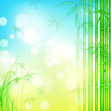 Bamboo forest with blue sky Royalty Free Stock Image