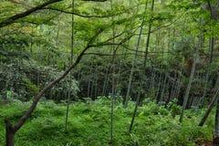 Bamboo forest in botanical garden Georgia Batumi Stock Image