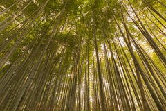Bamboo forest on bottom view in Arashiyama. Kyoto, Japan, natural landscape background Stock Photos