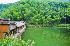 Bamboo forest. A break at the bamboo forest, encircling the lake Stock Images