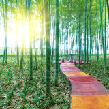 BAMBOO FOREST by China Royalty Free Stock Images