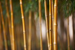 Bamboo forest in China Royalty Free Stock Photo