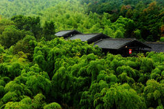 Bamboo forest and Chinese traditional houses Stock Photo