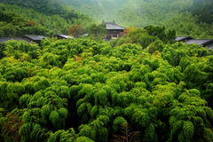 Bamboo forest and Chinese traditional houses Royalty Free Stock Photography