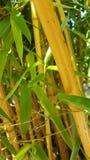 Bamboo forest. A Closer look stock photos