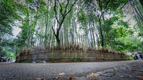 Bamboo forest curve in Arashiyama, Kyoto, Time Lapse in 4k stock footage