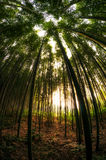 Bamboo forest in Damyang Stock Image