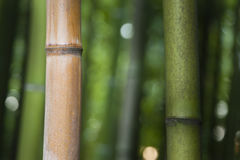 Bamboo forest detail Royalty Free Stock Photography