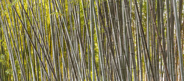 Bamboo forest detail Stock Photos