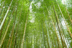 Bamboo forest diversity Stock Image