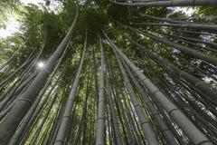 Arashiyama bamboo grove. The famous bamboo footpath at Arashiyama Kyoto Japan Royalty Free Stock Photo
