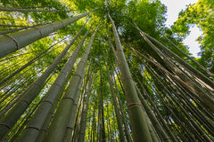 Bamboo trees Stock Photos