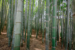 Arashiyama bamboo grove Royalty Free Stock Photo