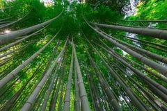Bamboo trees. The famous bamboo footpath at Arashiyama Kyoto Japan Stock Image