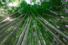 Bamboo trees Royalty Free Stock Photography