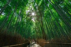 arashiyama bamboo grove Royalty Free Stock Image
