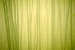 Bamboo forest in fog Royalty Free Stock Images