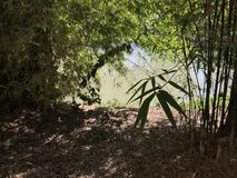The bamboo forest. The garden decorations with bamboo and the lake Royalty Free Stock Photo