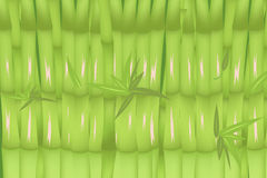 Bamboo Forest Green Background Design Vector Royalty Free Stock Images