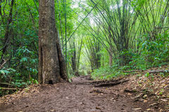 Bamboo forest groove Stock Photography