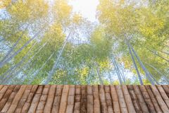Bamboo forest grove background with wooden table royalty free stock photography