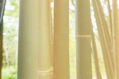 Bamboo forest. High bamboo forest with light Royalty Free Stock Image