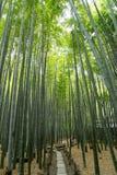 Bamboo Forest of Houkokuji Stock Image