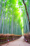 Bamboo Forest in Japan. Royalty Free Stock Photos