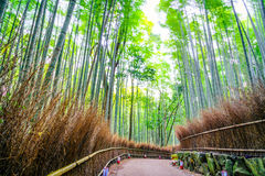 .Bamboo Forest in Japan Stock Images
