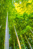 .Bamboo Forest in Japan Stock Photos