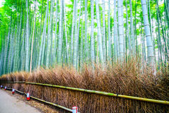 .Bamboo Forest in Japan Royalty Free Stock Images