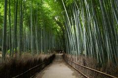 Bamboo Forest in Japan, Arashiyama Stock Images