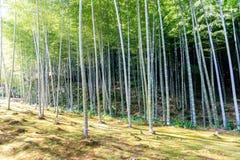 Bamboo forest in Japan, Arashiyama. Kyoto Stock Photos