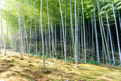 Bamboo forest in Japan, Arashiyama Stock Photo