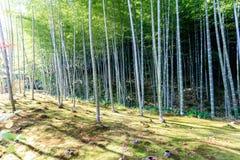 Bamboo forest in Japan, Arashiyama. Kyoto Royalty Free Stock Photography