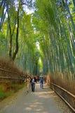 Bamboo Forest in Japan, Arashiyama, Kyoto. A Bamboo Forest in Japan, Arashiyama, Kyoto Stock Photos