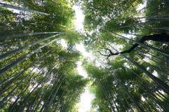 Bamboo Forest. Japanese Bamboo in arashiyama in 2016 Royalty Free Stock Image